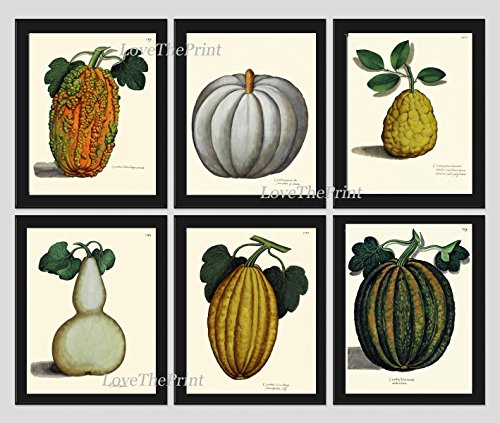 Botanical Set of 6 Prints Antique Beautiful Pumpkin Gourd Squash Green White Orange Fall