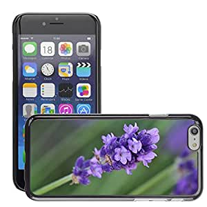 Print Motif Coque de protection Case Cover // M00290156 Lavanda Lavanda flor de la flor // Apple iPhone 6 6S 6G PLUS 5.5""