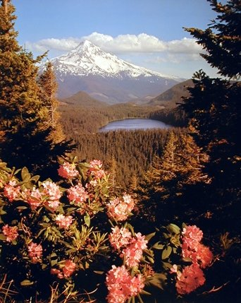 Mount Hood in Oregon Volcano Lost Lake Scenery Nature Wall Decor Art Print Poster (16x20) (Oregon Mount Hood)