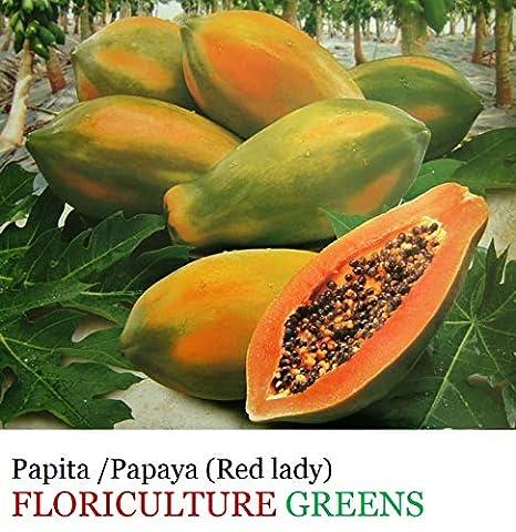 FLORICULTURE GREENS Papaya/Red Lady Organic F1 Hybrid Fruit Seeds ...
