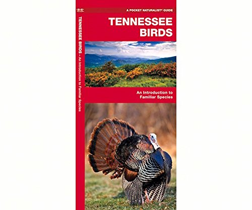 Waterford Tennessee Birds