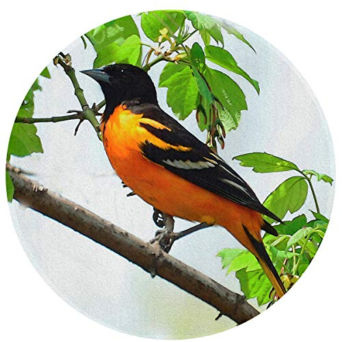 Baltimore Oriole Animal Bird Round Area Rug Home Decor Rug for Living Room, Anti-Slip Entry Way Door Mat Kitchen Mat - 2' X 2' Ft
