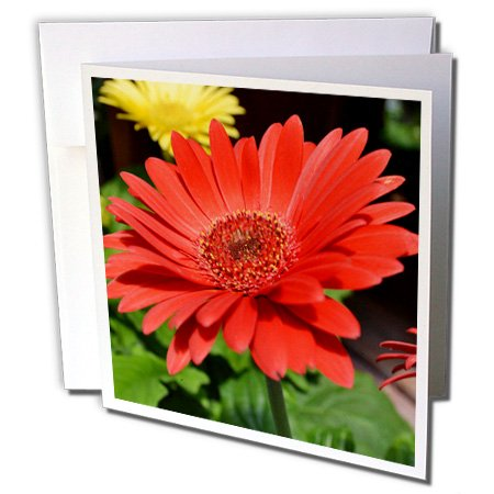 3dRose red gerbera daisy - Greeting Cards, 6 x 6 inches, set of 12 (gc_22706_2)