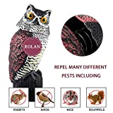 Rolan Owl Decoy Model Used to Scare Birds Away - Realistic Eyes & Waterproof Shape Owls for Bird Control