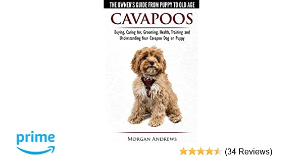 Cavapoos - The Owner's Guide From Puppy To Old Age - Buying