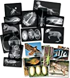 "Roylco R5910 Animal X-Ray Set, 8"" x 10"" Size"