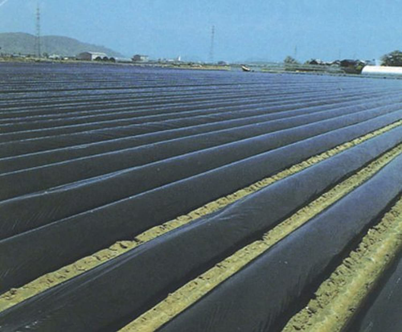 第一ビニール 家庭菜園用マルチ(黒) 0.02mm×135cm×50m