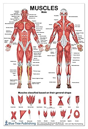 Amazon Com Muscles Male Poster 2 Views 24x36inch For