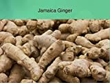 JAMAICAN GINGER - Zingiber officinale-Grow Your own ,Grow Indoors or Outdoors(1 Pound)