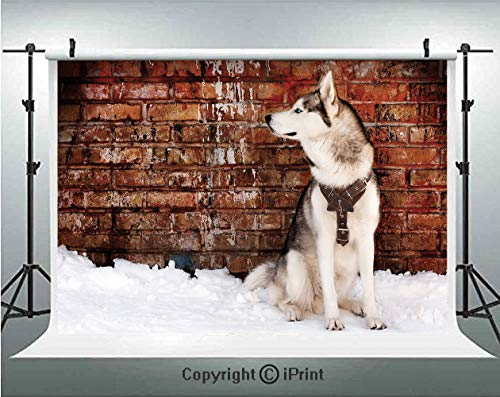 Alaskan Malamute Photography Backdrops Domestic Pet Grungy Brick Wall and Snow Pedigree Animal Friend Decorative,Birthday Party Background Customized Microfiber Photo Studio Props,7x5ft,Brown White Or