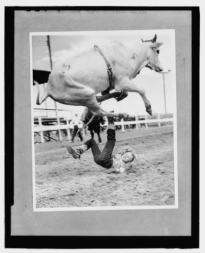 Photo: Big fall,Brahma bull,hurts pride,junior rodeo rider R