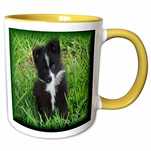 3drose Rebecca Anne Grant Photography Designs Dogs - Black White Markings Pomeranian Puppygreen Background Blended Frame - 11oz Two-tone Yellow Mug (mug_18404_8) Picture