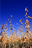 img - for Farm Journal Soybean Harvest Field: (Notebook, Diary, Blank Book) (Farm Photo Journals Notebooks Diaries) book / textbook / text book