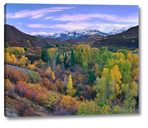 Quaking Aspen Forest in Autumn, Snowmass Mountain Near Quaking Aspen, Colorado by Tim Fitzharris - 23