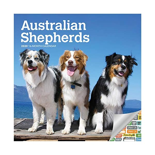 Australian Mini Shepherds Calendar 2020 Set - Deluxe 2020 Australian Shepherds Wall Calendar with Over 100 Calendar Stickers (Ausssie Gifts, Office Supplies) 1