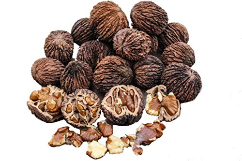 (BlueApe LLC Missouri Harvest Fresh Whole Black Walnuts 2018 3 Pounds in Shell Organic Perfect Squirrel Food - Black Walnut Tree Seeds - Juglans Nigra)