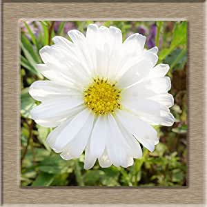 9 Color Available Callistephus Chinensis Seeds Balcony Potted Bonsai Plant Flower Seed Aster Seeds A Pack /100 Pcs