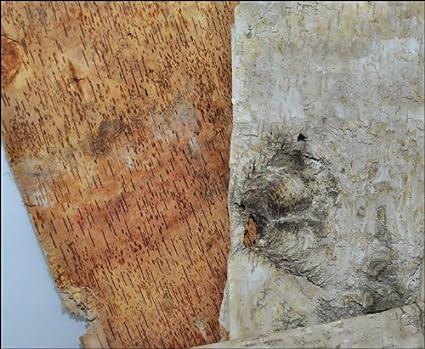 CONF. da 10 Steingaesser 80299 02 0400 fogli di corteccia di betulla 30 x 23 cm CREMA