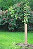 Orchard Innovations Tree Shield Grow Tube