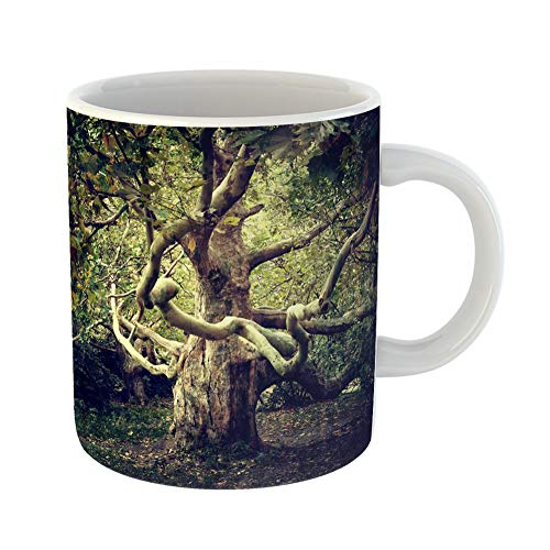 Emvency Coffee Tea Mug Gift 11 Ounces Funny Ceramic Green Forest Old Tree Sycamore Woods Magic Gifts For Family Friends Coworkers Boss Mug ()