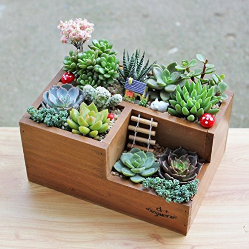Chris Wang Multifunctional 3 Compartment Wooden Desktop Office Supply Caddy Pencil Holder Desk Mail Organizer Succulent Plants Planter Classic Brown