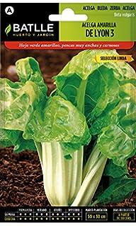Semillas Hortícolas - Acelga verde de penca blanca 3 sel. Pencosa ...