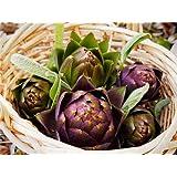 Artichoke Purple Italian Globe (Heirloom) 100 Seeds Upc643451294514
