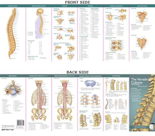 The Vertebral Column & Spine Disorders (Anatomical Chart Company's Illustrated Pocket Anatomy) ()