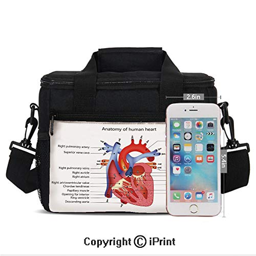 Insulated Lunch Bag Box for Men and Women, Medical Structure of the Hearts Human Body Anatomy Organ Veins Cardiology converts to a Tote Handbag - Easy to Clean Polyester Cloth for Adults and Kids Cor (Anatomy Of The Human Body Organs Female)