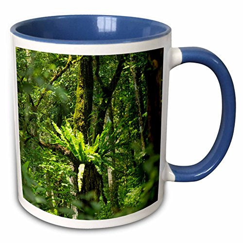 3dRose Danita Delimont - Forests - Indonesia, Bali. Botanic Garden - 15oz Two-Tone Blue Mug (mug_225779_11) ()