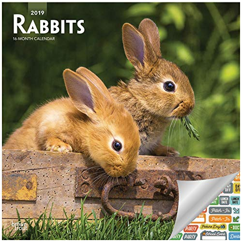 Rabbits 2019 Calendar 2019 Set - Deluxe 2019 Rabbits 2019 Wall Calendar with Over 100 Calendar Stickers (Rabbits 2019 Gifts, Office Supplies)