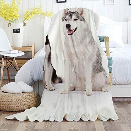- Alaskan Malamute,Throw Blankets,Flannel Plush Velvety Super Soft Cozy Warm with/Furry Arctic Doggies Husky Whelp Pedigree Pet Happy Siberian Mammal Decorative/Printed Pattern(50