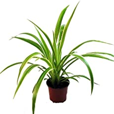 the 5 best office plants to boost your productivity earth911com best office plant no sunlight