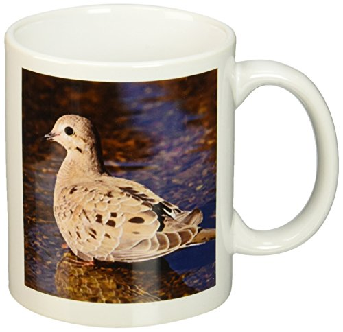 3drose-mourning-dove-rio-grande-valley-texas-rolf-nussbaumer-ceramic-mug-11-oz