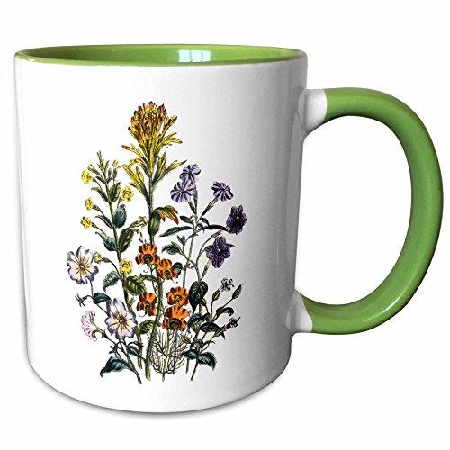 3dRose BLN Vintage Flower Collection - Browallia, Mimulus, Castilleja, Torenia, Alonsoa Flowers in Yellow, white and lavender - 11oz Two-Tone Green Mug (mug_153351_7)