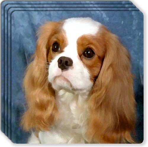 Cavalier King Charles Spaniel Rubber Coaster - Gifts Spaniel Set