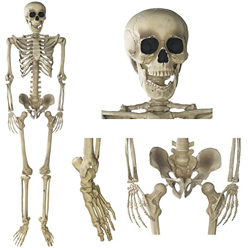 Amazon.com: Prextex 5 Ft. Tall Halloween Skeleton- Full Body ...