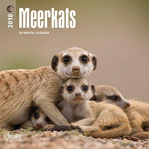 Book Meerkats 2018 Mini 7 x 7 Inch Wall Calendar, Wildlife Animals Africa (English, French and Spanish Ed [R.A.R]