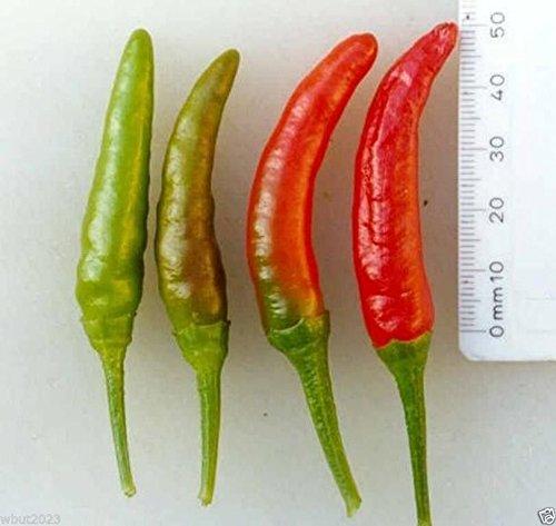 (Pepper, Rooster Spur (Capsicum annuum) ORGANIC-30 Seeds-Mississippi heirloom)