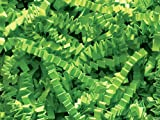 Lime 1LB - Crinkle Cut Paper Shred Filler for Gift Wrapping & Basket Filling | Colors of Rainbow