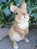 うさぎの置物 ラビットN N12242 ラビット 兎 オーナメント ウサギ ラパン オーナメント オブジェ ガーデン ガーデニング マスコット リアル