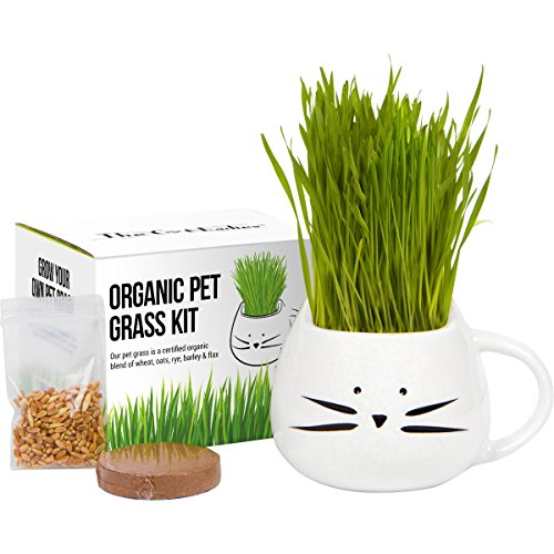 Cat Grass Growing Kit