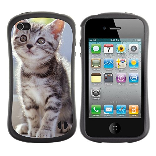 Apple Iphone 4 / 4S [Tabby Kittens]
