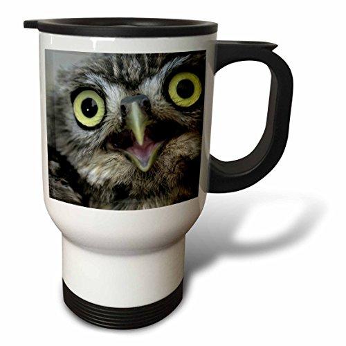 3dRose Little Owl, Athena Noctua, Aragon Spain Europe Stainless Steel Travel Mug, 14-Ounce by 3dRose
