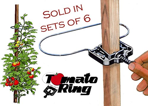 Tomato Ring - Tomato Cage - Plant support/Tomato support - 6 Pack