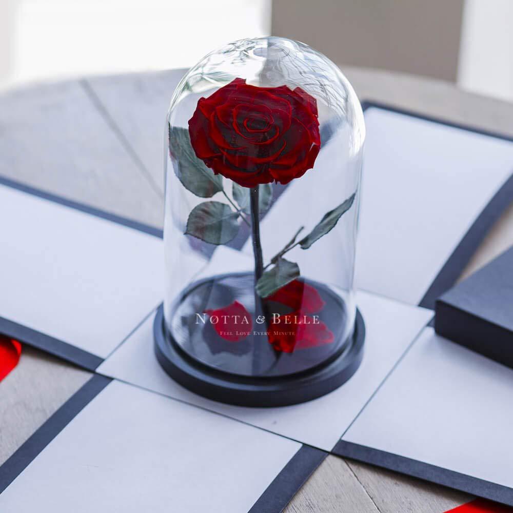 Coffret Cadeau Taille pr/émium 27cm. Rose /éternelle sous Cloche La Belle et la B/ête