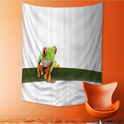 Red Eyed Tree Frog Care Sheet