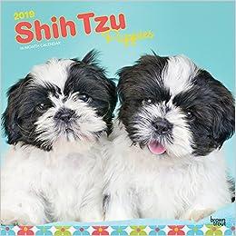 Shih Tzu Puppies Shih Tzu Welpen 2019 18 Monatskalender Mit