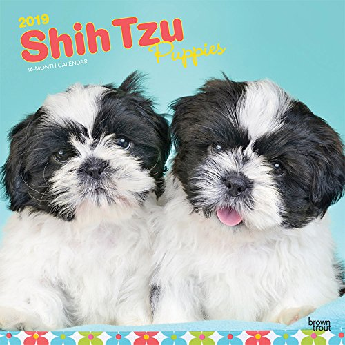 Shih Tzu Puppies 2019 12 x 12 Inch Monthly Square Wall Calendar, Animal Small Dog Breed Puppies (Multilingual Edition) by