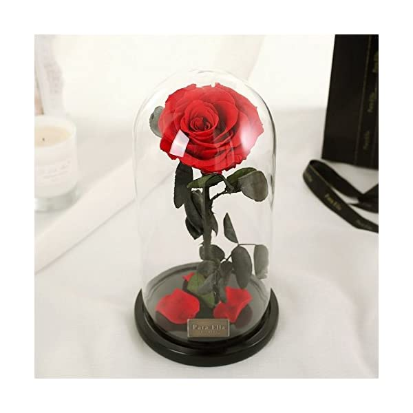 Beauty-and-The-Beast-Red-Rose-Preserved-Fresh-Flower-with-Fallen-Petals-in-a-Glass-Best-Gifts-for-Lovers-Box